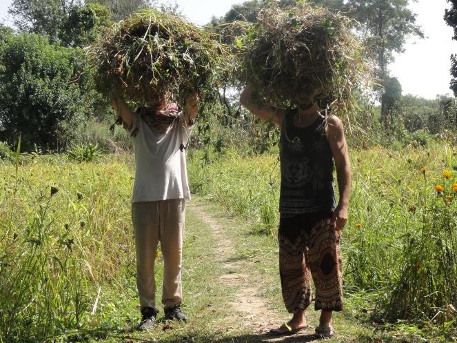 Carrying grass for shredding